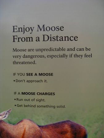 enjoy-moose