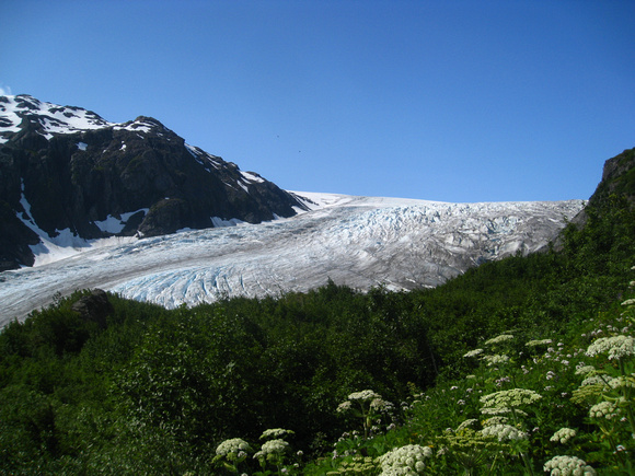 annabarr: Alaska - Kenai Fjords NPS - July 2012 &emdash; exit-glacier-top