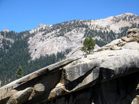 Sequoia NP - August 2004