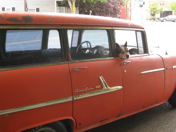annabarr: Seattle &emdash; blind-dog