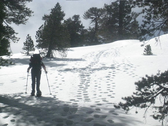 annabarr: Mt Baden-Powell - March 20, 2010 &emdash; well-traveled