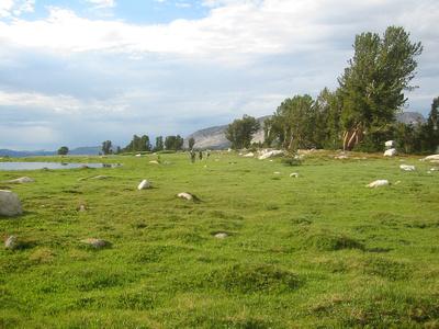 top-meadow