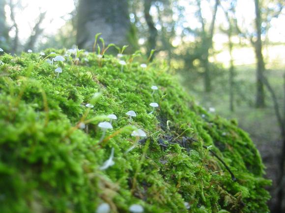 annabarr: John Muir NHS - December 31, 2005 &emdash; fungus-forest